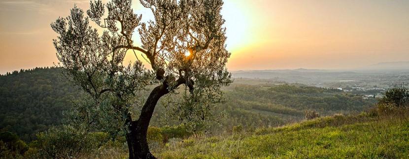 California Oak at Sunset