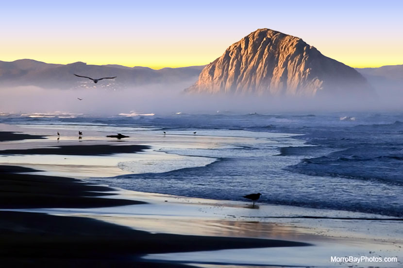 California Gull Soaring Near Morro Rock